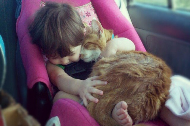cat and baby cuddling in a car seat