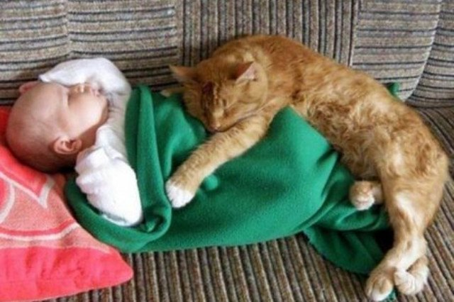 cat cuddling baby in a green blanket
