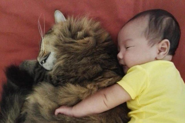 cat and baby cuddling
