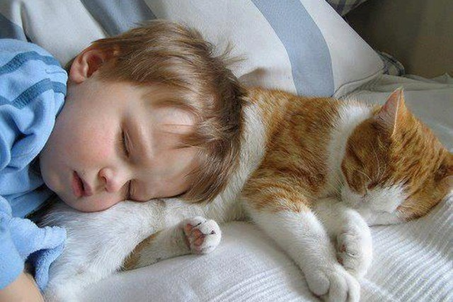 cat sleeping next to baby on pillow