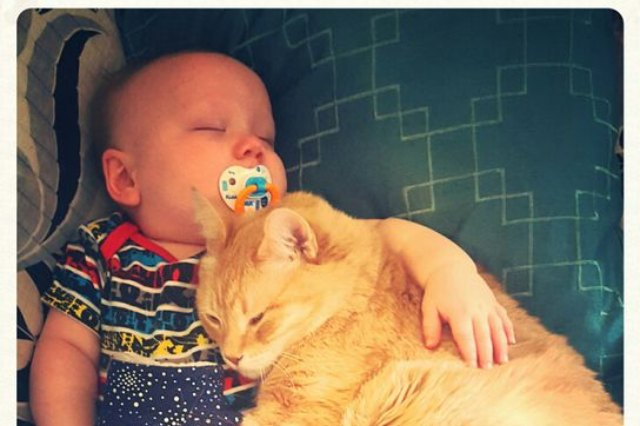 baby and cat taking a nap together