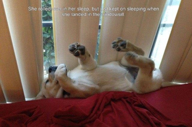 sleeping puppy against a window