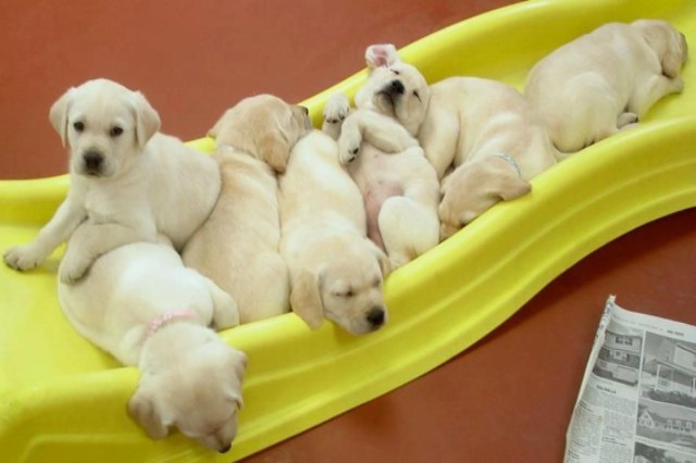 puppies sleeping on a slide
