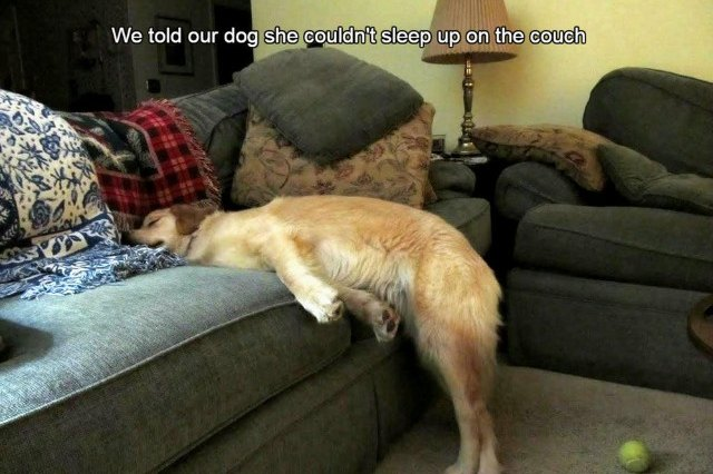 Dog sleeping with head on couch