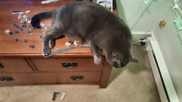 cat sleeping on top of jigsaw puzzle