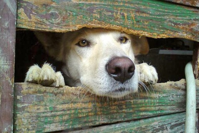 Dogs Peeking At You Through Fences