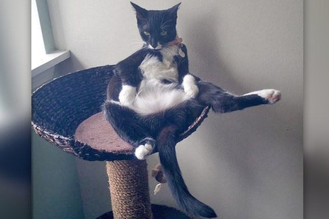 18 of the Finest Cat Bellies the World Has Ever Seen
