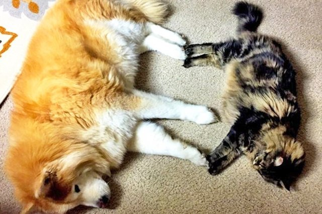 Cats Who Have Fallen Madly in Love With the Dog