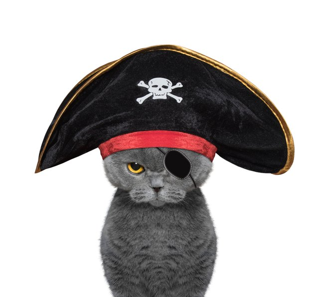 cute cat in a pirate costume