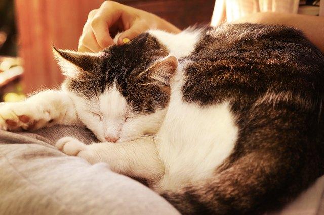 close up photo of senior cat