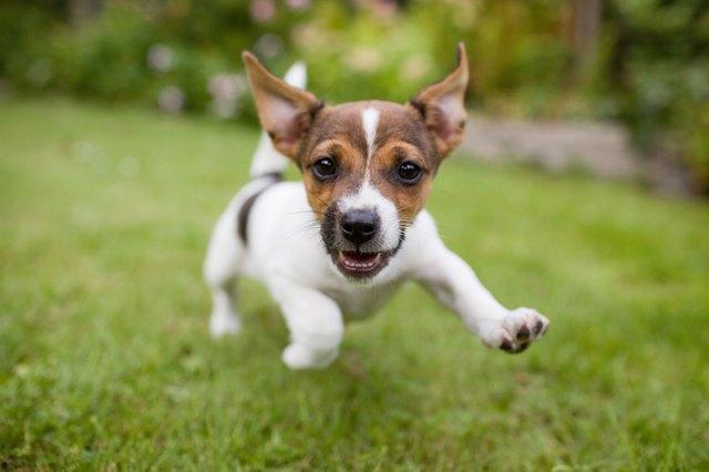 Funny happy Dog