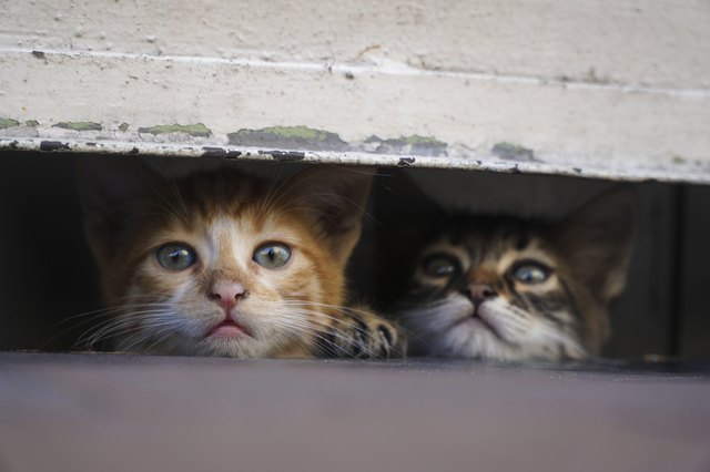 Curious Little Kittens are Hiding At The Pavement