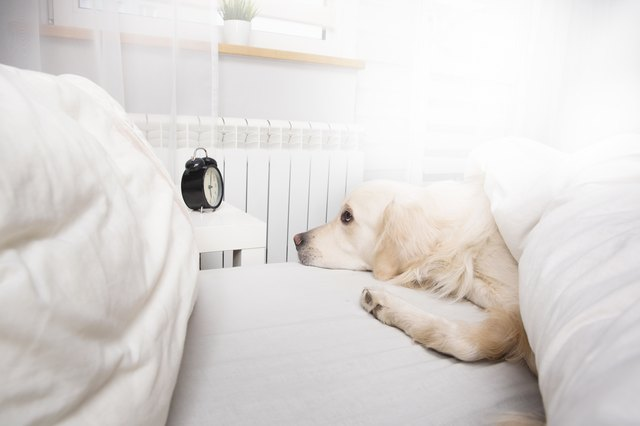 Dog resting in bed