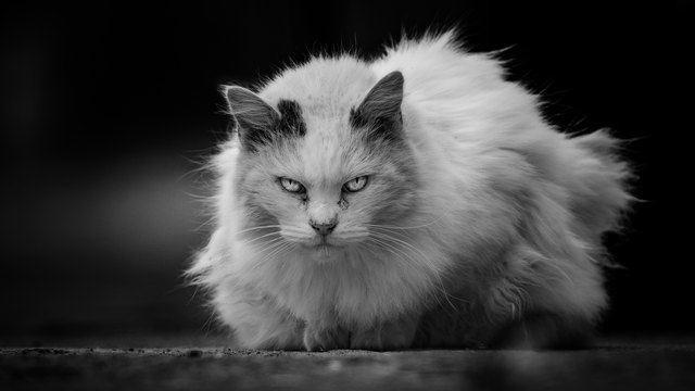 Close-Up Portrait Of Cat Sitting On Street