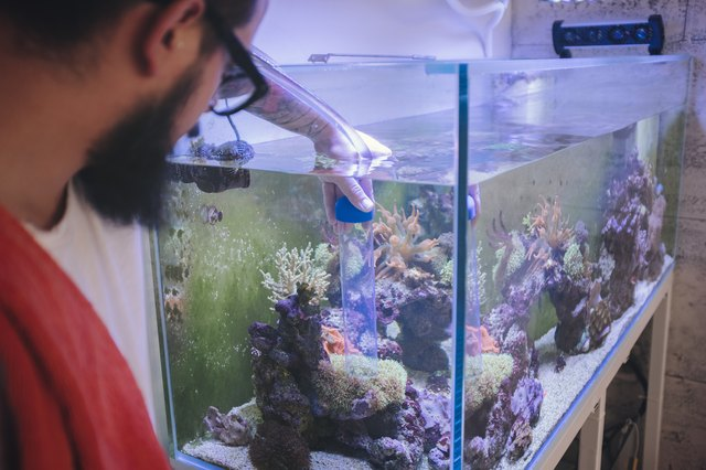 how to get good bacteria in fish tank