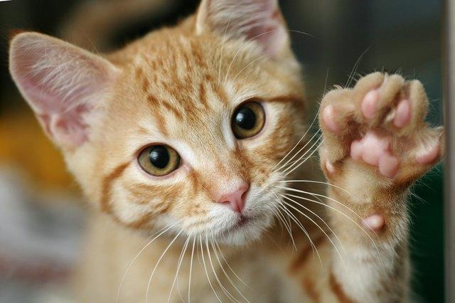 Котенок с поднятой лапой