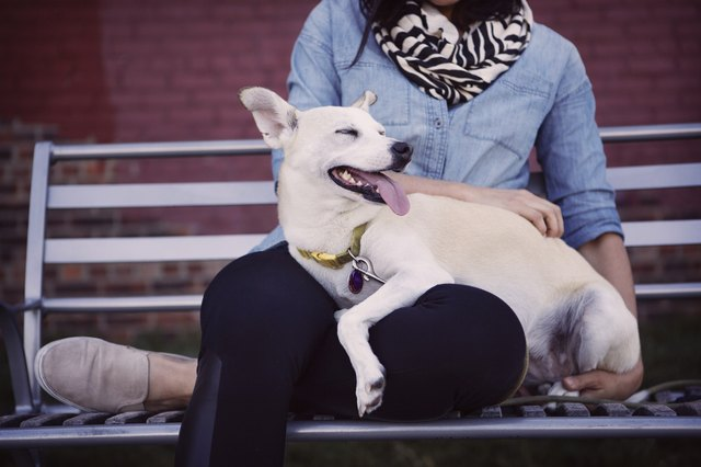 Low section of woman with dog sitting on bench against wall