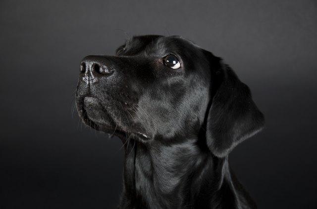 Image of: Labrador Retriever Reading With Rhythm Wordpresscom 200 Names For Black Dogs Cuteness