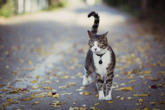 cat on alert in an alley