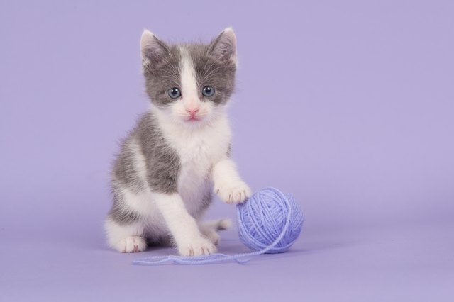 Portrait Of Cat Against Purple Background
