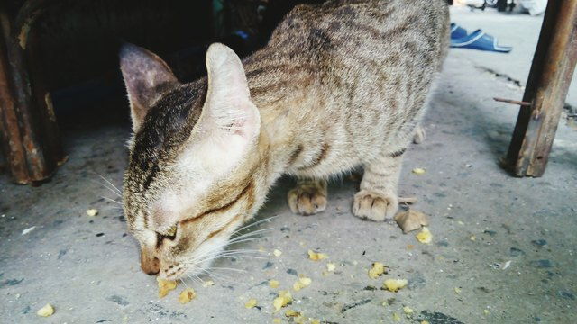 Close-Up Of Cat Eating Food On Footpath