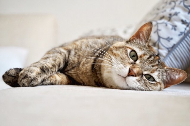 Close-Up Portrait Of Cat Lying On Floor