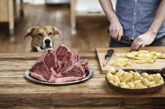 Can Dogs Eat Onions Occasionally