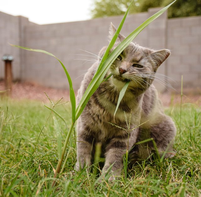 Close-Up Of Cat Eating Grass