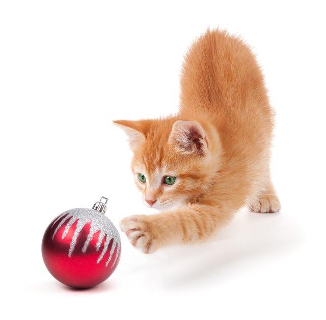 Милый оранжевый котенок играет с рождественским орнаментом на белом