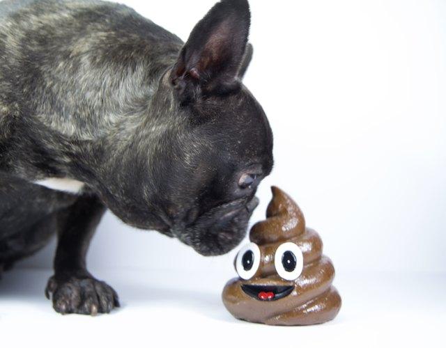 Dog smelling poo