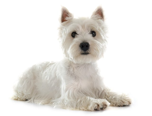 100 Adorable Names If You Have A White Dog Cuteness