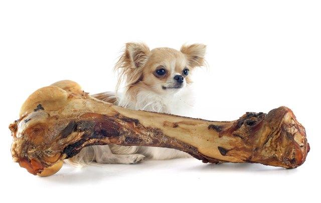 can dogs eat turkey bones