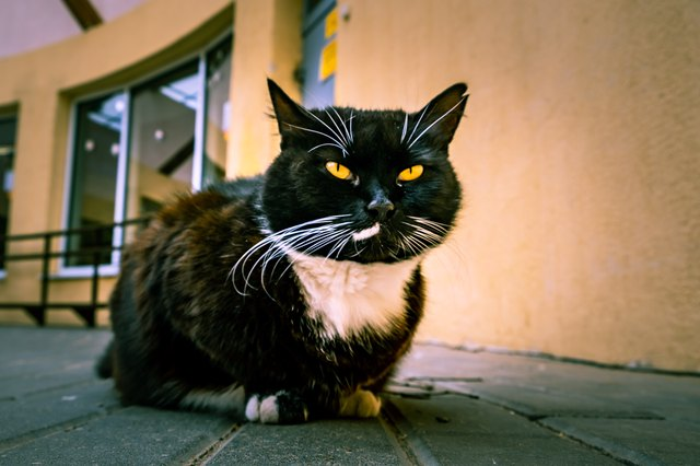 Black cat with white spot and yellow eyes squinting into the camera