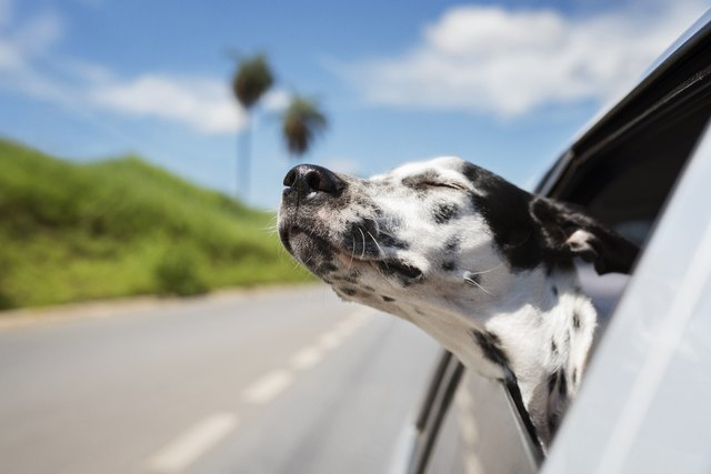 Dalmatian dog with eyes closed riding in car against sky