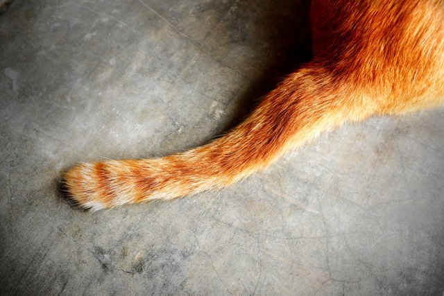 tail of a cat