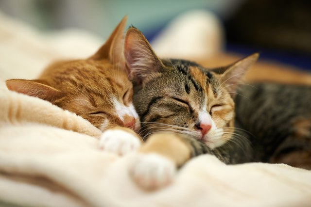 Do Cats Recognize Other Cats? | Cuteness