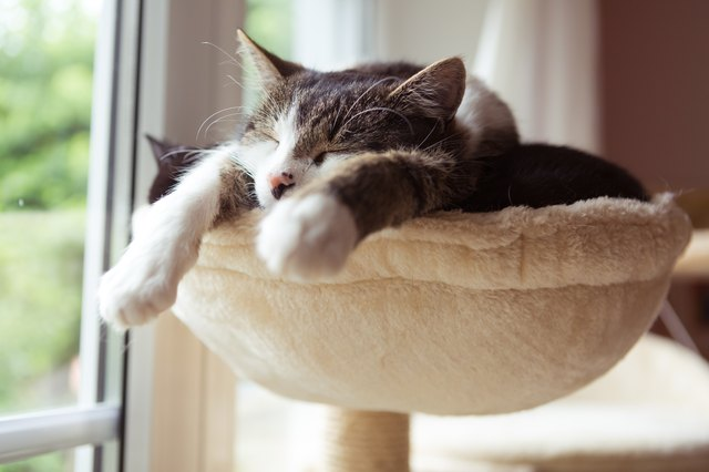 two cats asleep in small cat hammock