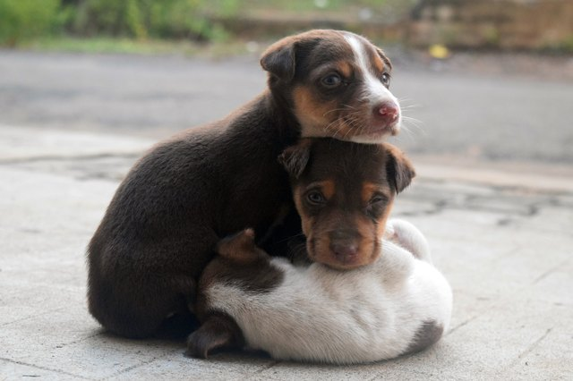 Close-Up Of Puppies