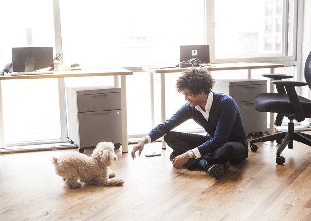 Man playing with poodle at office
