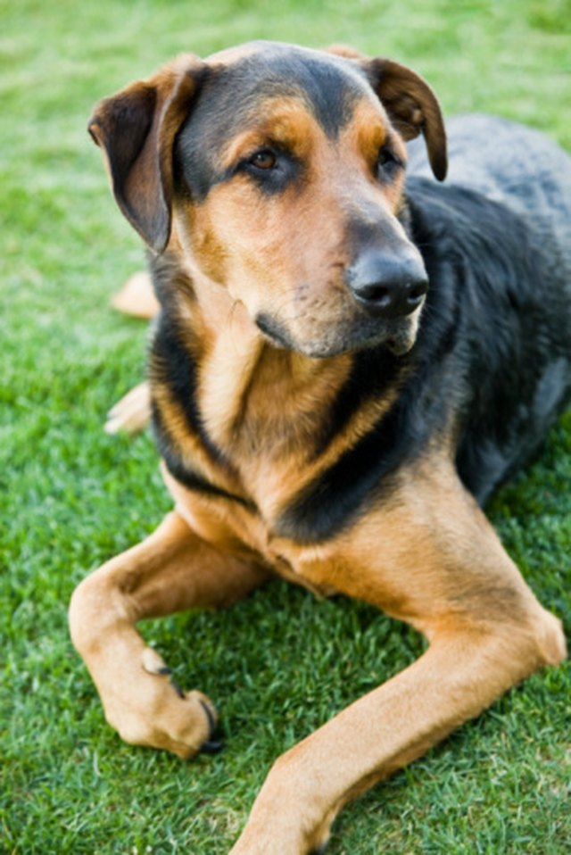 Ivermectin safe for dogs