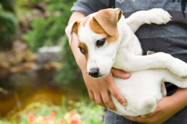 How To Get Rid Of Dog Worms Without Medicine Cuteness