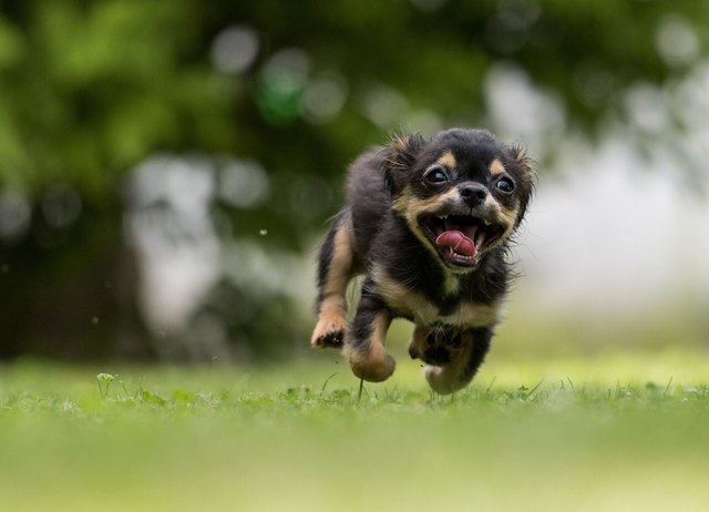 Dog Running On Grassy Field