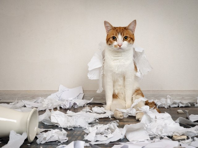 Funny cat made a mess, tore up paper