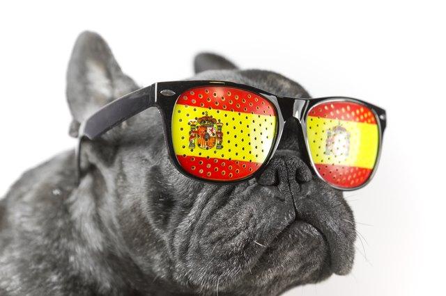 300 Unique Spanish Names For Dogs Cuteness