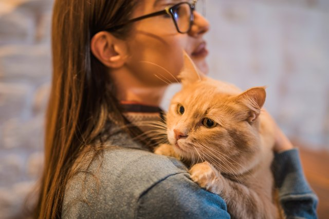 Young woman holding her beautiful Maine Coon cat.