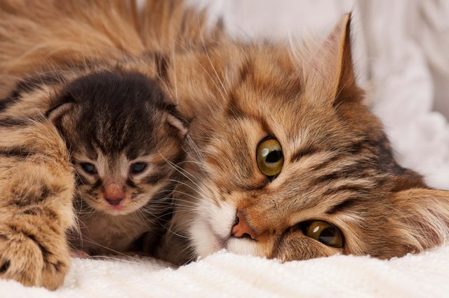 15 Amazing Facts About Cat Adoption That You Didn't Know