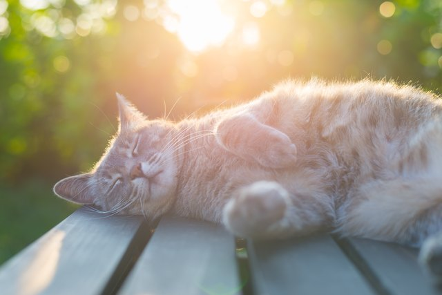 Cat lying on bench in sun