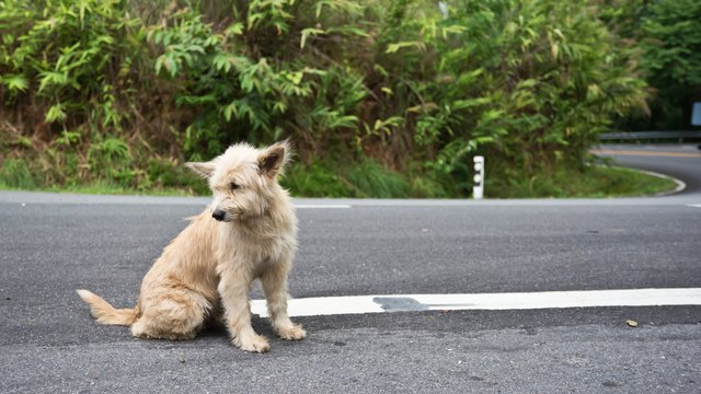 Cute homeless stray dog