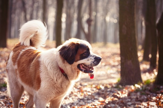 photo of the dog