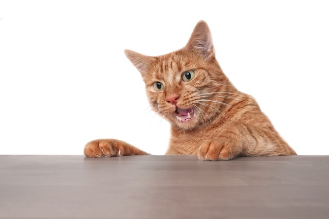 Funny ginger cat looking surprised at the table.